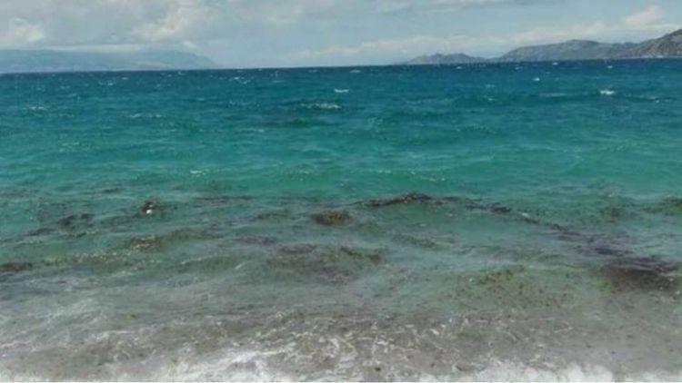 Φωκίδα: Επιδρομή μεδουσών στην παραλία του Αγίου Μηνά! (ΦΩΤΟ)