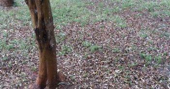 Αιτωλοακαρνανία: Η κακοκαιρία «σάρωσε» την αγροτική παραγωγή