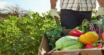 """Μεσολόγγι: Ημερίδα για τον Αγροδιατροφικό Τομέα του έργου """"AgroInnoEco"""""""