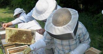 Μελισσοκομικό σεμινάριο στο Μεσολόγγι