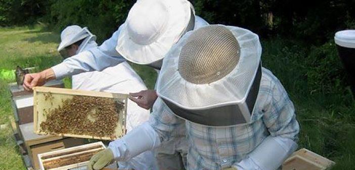 Διεύθυνση Αγροτικής Οικονομίας και Κτηνιατρικής Αιτωλοακαρνανίας: Πρόσκληση υποβολής αιτήσεων στους μελισσοκόμους