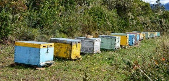 Καρπενήσι: Συγκέντρωση για την ανάπτυξη και ταυτοποίηση του μελιού στην Ευρυτανία
