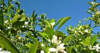 Ναβαλίνες: Η Αιτωλοακαρνανία στη δίνη της ακαρπίας