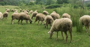 Ολοκληρώθηκε το πρόγραμμα Βιολογική Γεωργία – Κτηνοτροφία 2012-2016 από την Περιφερειακή Ενότητα Αιτωλοακαρνανίας