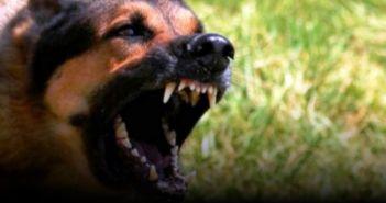 Ναύπακτος: Αδέσποτα σκυλιά δάγκωσαν γυναίκα στην παραλία Παλαιοπαναγιάς