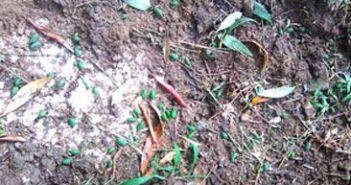 Χαμένη χρονιά για ένα μεγάλο μέρος των παραγωγών ελιάς Καλαμών στην Αιτωλοακαρνανία, από ποιες περιοχές πέρασε το χαλάζι