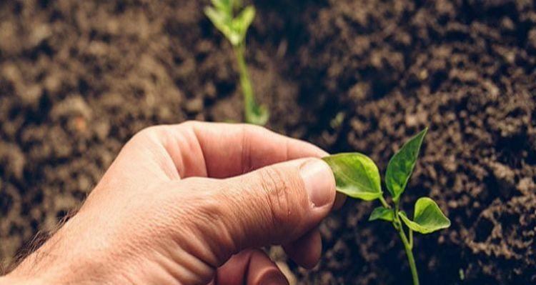 Ένωση Αγρινίου: Ξεκινά το Πρόγραμμα Δημιουργίας Νέων Ποικιλιών Φυτικών Ειδών
