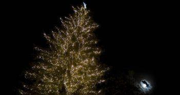 Τρολάρισμα από τα …λίγα – Άναψαν το… χριστουγεννιάτικο δέντρο καλοκαιριάτικα! (ΔΕΙΤΕ ΦΩΤΟ)