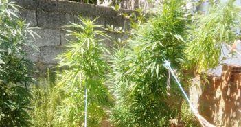 Φυτεία με χιλιάδες δενδρύλλια κάνναβης εντοπίστηκαν στην περιοχή του Λούρου
