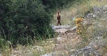 Πεζοπόρος φωτογράφησε αρκούδα στον Πλάτανο Ναυπακτίας! (ΦΩΤΟ)