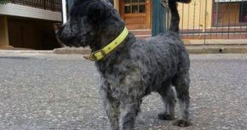 Καμαρούλα Αγρινίου: Εξαφάνιση σκύλου – Μπορείτε να βοηθήσετε;