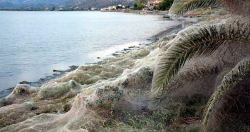 Ο Φορέας Διαχείρισης για το φαινόμενο στο Αιτωλικό με τις αράχνες και τις σκνίπες