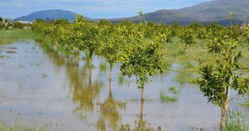 Αιτωλοακαρνανία: Πληρωμή αποζημιώσεων ύψους 515.003,05 ευρώ από τον ΕΛΓΑ