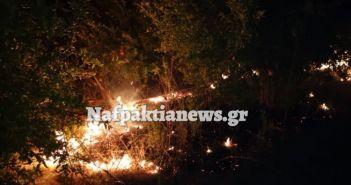 Γαβρολίμνη: Πυρκαγιά ξέσπασε μέσα σε χωράφι με ροδιές (ΔΕΙΤΕ VIDEO + ΦΩΤΟ)