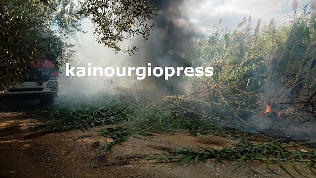 Καινούριο: Ανησυχία για τον πυρομανή, νέα πυρκαγιά στη Χαραυγή (ΔΕΙΤΕ ΦΩΤΟ)