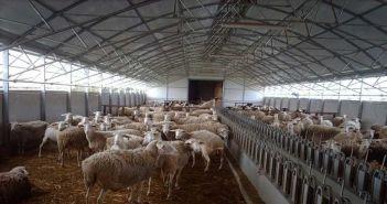 ΓΕΩΤ.Ε.Ε. Δυτικής Στερεάς Ελλάδας: Κατέθεσε τις απόψεις του επί του Σχεδίου Νόμου σχετικά με τις ρυθμίσεις για την ίδρυση και λειτουργία κτηνοτροφικών εγκαταστάσεων