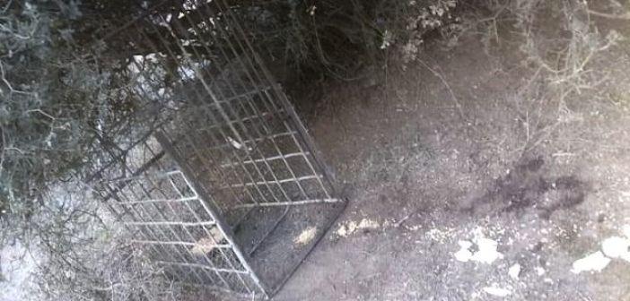 Θηροφύλακες συνέλαβαν λαθροθήρα στην Κατούνα που παγίδευε αγριόχοιρους (ΔΕΙΤΕ ΦΩΤΟ)