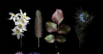 """Αγρίνιο: Εγκαίνια Έκθεσης Σπύρου Γιολδάση – """"Πορτρέτα Φυτών"""" (ΔΕΙΤΕ ΦΩΤΟ)"""