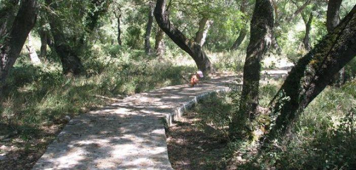 Οινιάδες: Το σπάνιο δάσος του Φράξου (ΔΕΙΤΕ ΦΩΤΟ)