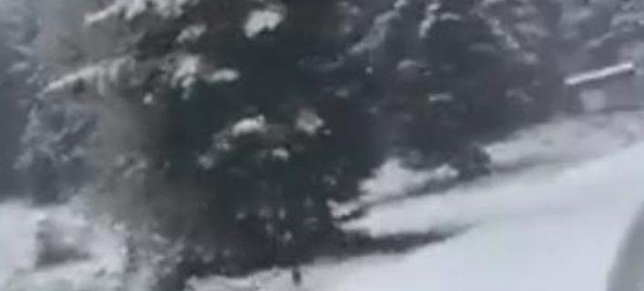 Στα λευκά και η Ευρυτανία – Απόλυτα χειμερινή διαδρομή, μέσα στο χιόνι, προς το Κρίκελλο (ΔΕΙΤΕ VIDEO)