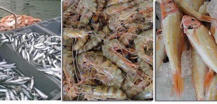 Γαρίδα, σαρδέλα και κουτσομούρα του Αμβρακικού προωθούνται για να χαρακτηριστούν ως προϊόντα Π.Ο.Π.