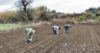 21,9 εκατ. ευρώ στους δικαιούχους του προγράμματος Βιολογικής Γεωργίας