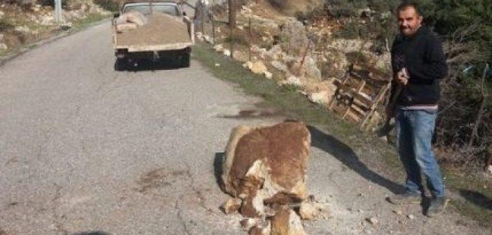 Ξηρόμερο: Έπεσε βράχος στο δρόμο για τα Βλυζιανά (ΔΕΙΤΕ ΦΩΤΟ)