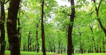 Το μήνυμα της Διεύθυνσης Δασών Αιτωλοακαρνανίας για την Παγκόσμια Ημέρα Δασοπονίας