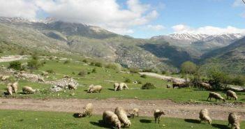 Περιφέρεια Δυτικής Ελλάδας: Νέες Πληρωμές για τις δράσεις Βιολογικής Κτηνοτροφίας & Σπάνιων Φυλών
