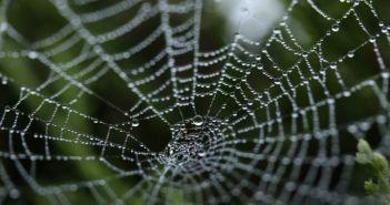 Η στρατηγική της αράχνης στο ΟΣΔΕ