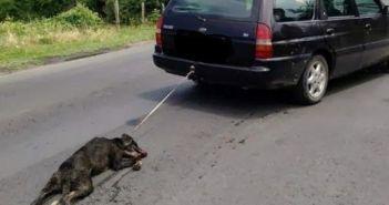 Βόνιτσα: Έσερνε σκύλο στην άσφαλτο με το αυτοκίνητο (ΔΕΙΤΕ VIDEO)