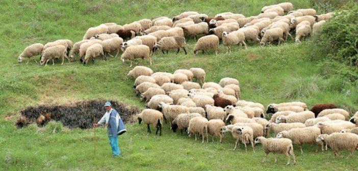 Αγρίνιο: Ξεκινά η εκπαίδευση νέων κτηνοτρόφων από το πρόγραμμα «Νέα Γεωργία για τη Νέα Γενιά»