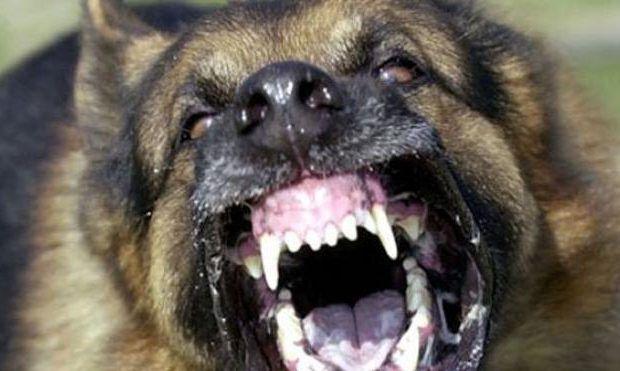 Δυτική Ελλάδα: Με τραύματα στα χέρια αθλήτρια από επίθεση σκύλου