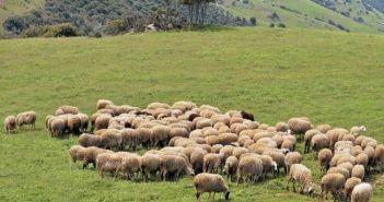 Συνεχίζονται οι πληρωμές στο πρόγραμμα βιολογικής κτηνοτροφίας στην Π.Ε. Αιτωλοακαρνανίας