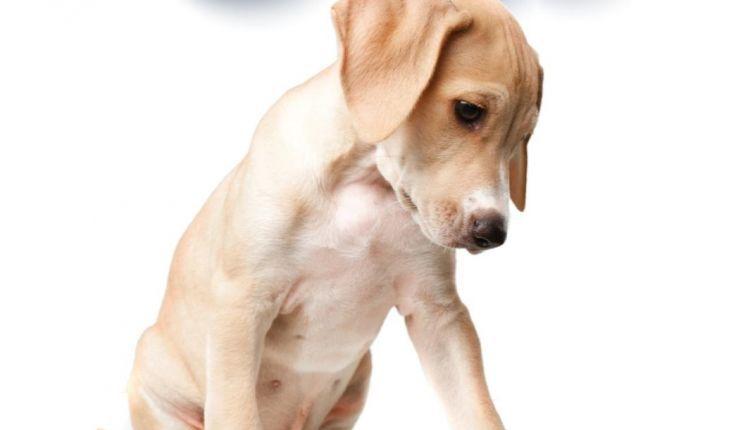 Τις υποχρεώσεις των ζώων συντροφιάς υπενθυμίζει ο Δήμος Αγρινίου στους δημότες του
