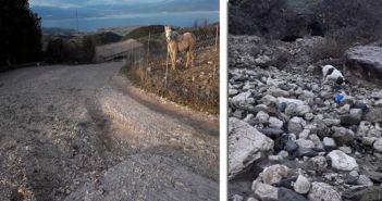 Σε απόγνωση αγρότες και κτηνοτρόφοι στο Θύρρειο Βόνιτσας από τις βροχοπτώσεις (ΔΕΙΤΕ ΦΩΤΟ)
