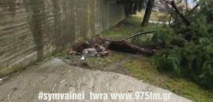 Προβλήματα στην Eυρυτανία από την κακοκαιρία – Ξεριζώθηκαν δέντρα στο Καρπενήσι (ΔΕΙΤΕ VIDEO)