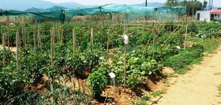 Δήμος Αγρινίου: Πρόθεση για επέκταση του δημοτικού λαχανόκηπου