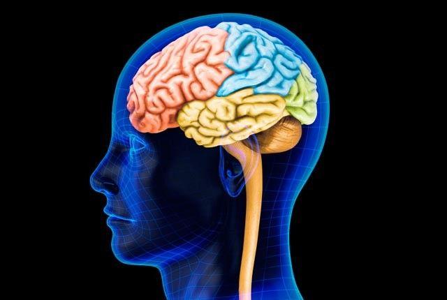 """""""Εγκέφαλος… ο Σκηνοθέτης της Ζωής μας"""" – Eκδήλωση από το ΣΔΕ Μεσολογγίου"""