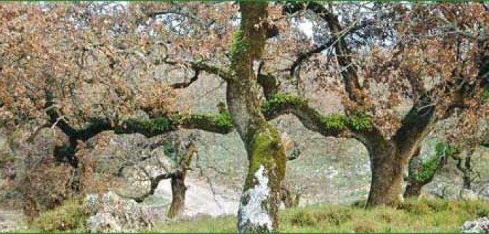 Ξεκληρίζουν το βελανιδοδάσος του Ξηρομέρου