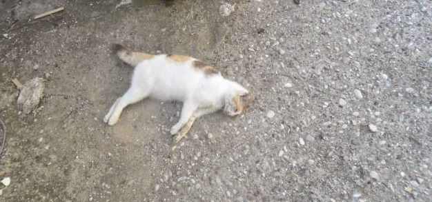 Βόνιτσα: Άγνωστοι θανάτωσαν γάτα με φόλα – Σχηματισμός δικογραφίας σε βάρος τους