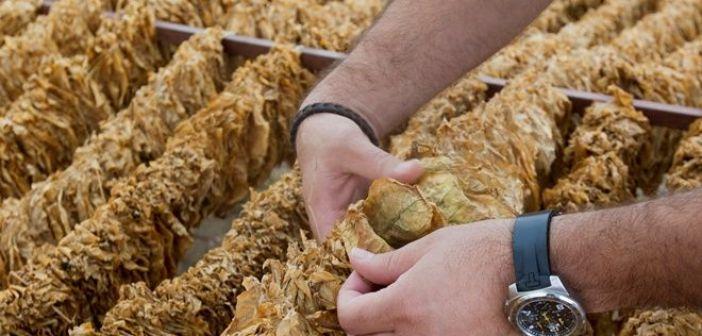 Επί τάπητος η ιστορία του καπνού – Μείζονος σημασίας για το Αγρίνιο, η αυριανή ημερίδα στο ΤΕΕ