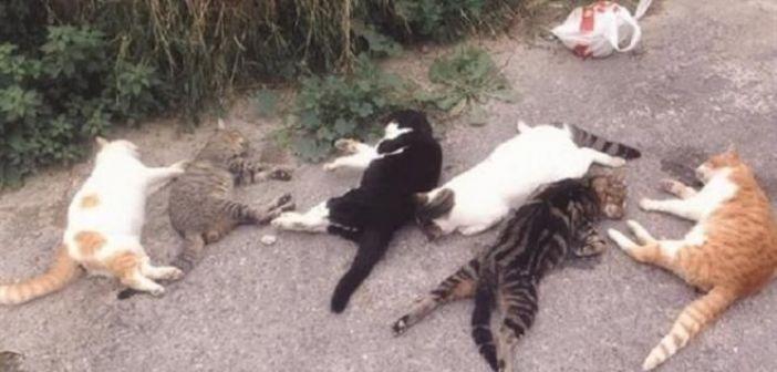 Νέο περιστατικό θανάτωσης ζώων στο Αγρίνιο