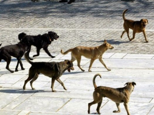 Συνεργασία του Δήμου Ιεράς Πόλεως Μεσολογγίου με το Δίκτυο Ελλήνων Εθελοντών για την παροχή κτηνιατρικής υποστήριξης