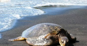 Επιφυλακή στον Αμβρακικό για τις χελώνες