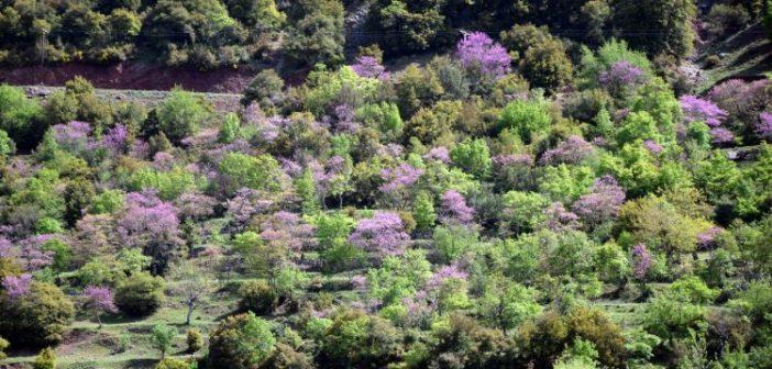 Από την χλωρίδα της Άνοιξης στην ορεινή Ναυπακτία και το Θέρμο (ΔΕΙΤΕ ΦΩΤΟ)