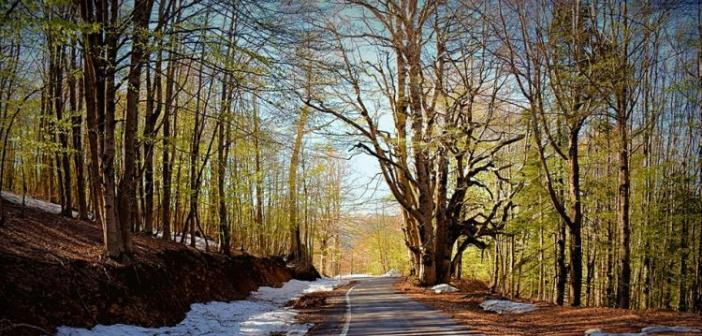 """Ορεινή Ναυπακτία: Στο """"Δάσος της Οξυάς"""" (ΔΕΙΤΕ ΦΩΤΟ)"""
