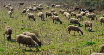 Ένωση Αγρινίου – Εξισωτική Αποζημίωση: με 240 εκατ. ευρώ η Πρόσκληση