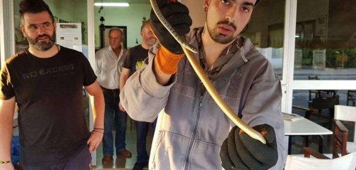 Μάθημα… για το φίδι σαΐτα σε καφενείο της Αβώρανης! (ΔΕΙΤΕ ΦΩΤΟ)