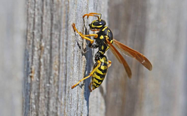 Ιόνιο: Τουρίστρια πέθανε από τσίμπημα σφήκας στην Κεφαλονιά